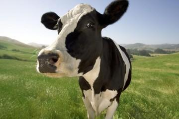 los efectos de la leche de vaca en el deporte